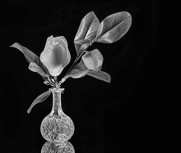 Photograph - Crystal And Magnolia Still Life Black And White by JC Findley