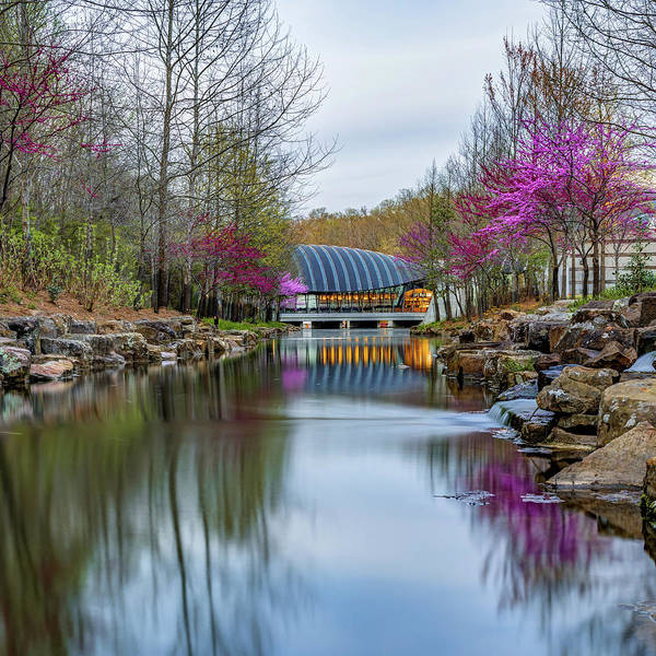 Photograph - Crystal Bridges Museum River Trail With Redbud Trees 1x1 by Gregory Ballos