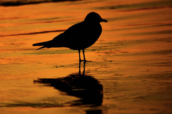 Photograph - Crystal Cove Bird by Kyle Hanson