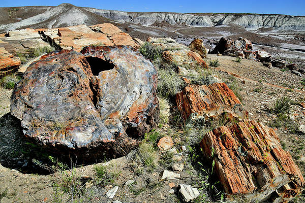Photograph - Crystal Fores In Petrified Wood Np by Ray Mathis