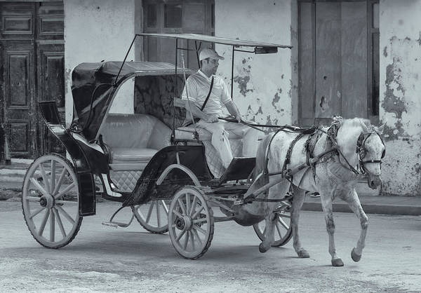 Photograph - Cuban Horse Taxi by Tom Singleton