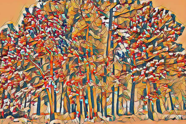 First Snowfall Wall Art - Photograph - Cubist Trees 1 by Eric Glaser