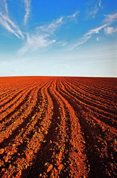Cultivate Photograph - Cultivated Field In Tasmania, Australia by Australian Scenics