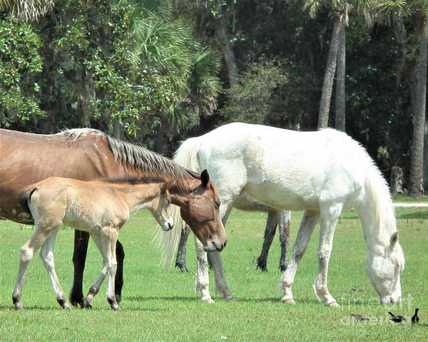 Painting - Cumberland Horses Family Portrait by Kristen Abrahamson