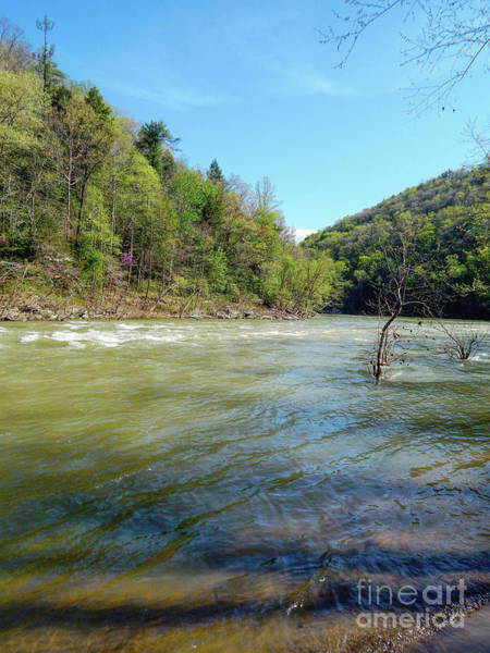 Photograph - Cumberland River by Phil Perkins