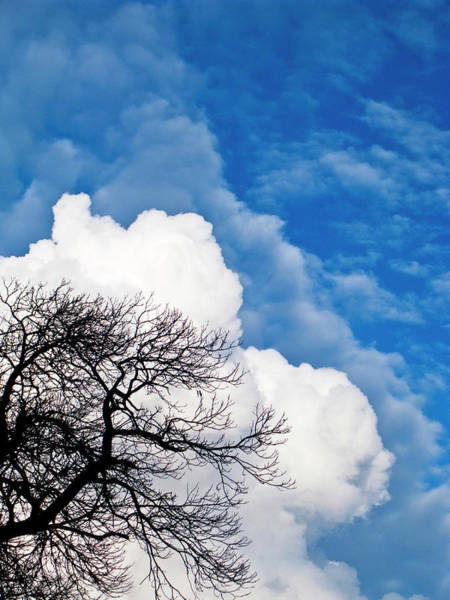 Nottinghamshire Photograph - Cumulo Nimbus Clouds And Tree by Doug Chinnery