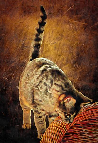 Photograph - Curiosity And The Cat by Dorothy Berry-Lound
