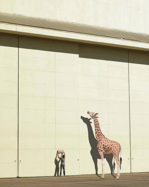 Giraffe Photograph - Curious Giraffe by Richard Newstead