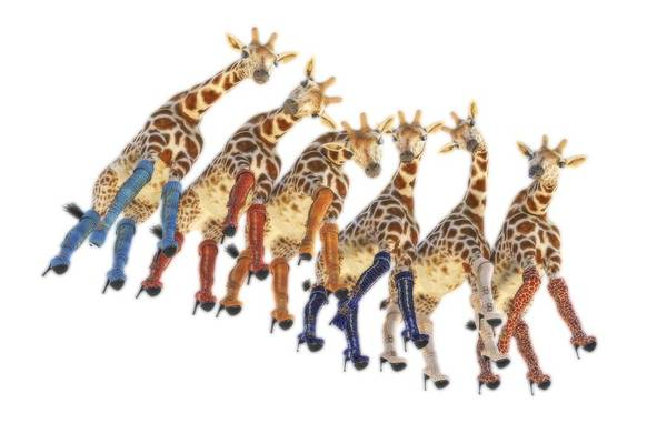 Wall Art - Digital Art - Curious Giraffes Png by Betsy Knapp