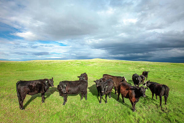 Wall Art - Photograph - Curious Herd by Todd Klassy