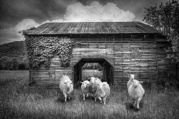 Wall Art - Photograph - Curious In Black And White by Debra and Dave Vanderlaan