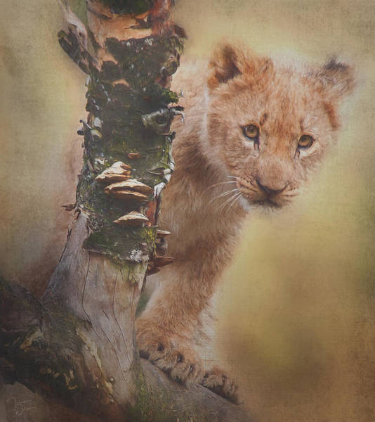 Mixed Media - Curious Lion Cub By Tl Wilson Photography by Teresa Wilson