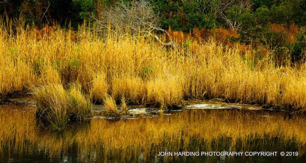 Photograph - Currituck Reflections by John Harding