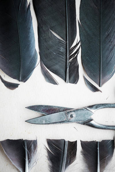Wall Art - Photograph - Cut Feathers And Scissors by Richard Nixon