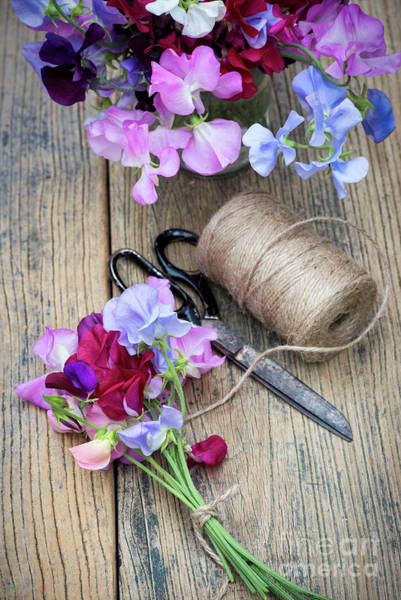 Photograph - Cut Sweet Pea Flowers  by Tim Gainey