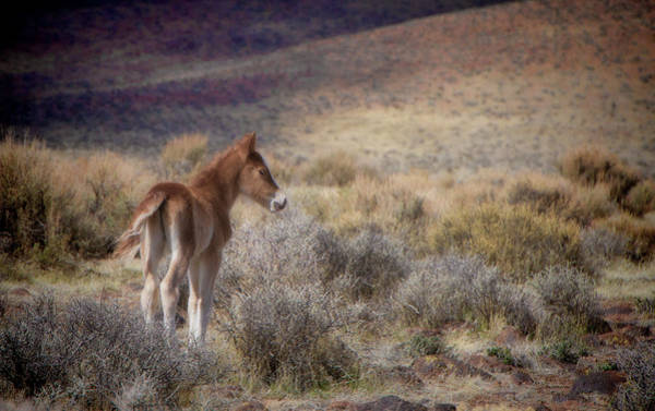 Photograph - Cute Baby Foal In The Wild by Waterdancer