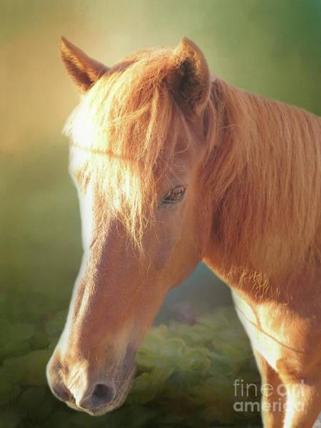 Icelandic Digital Art - Cute Chestnut Pony by Elisabeth Lucas