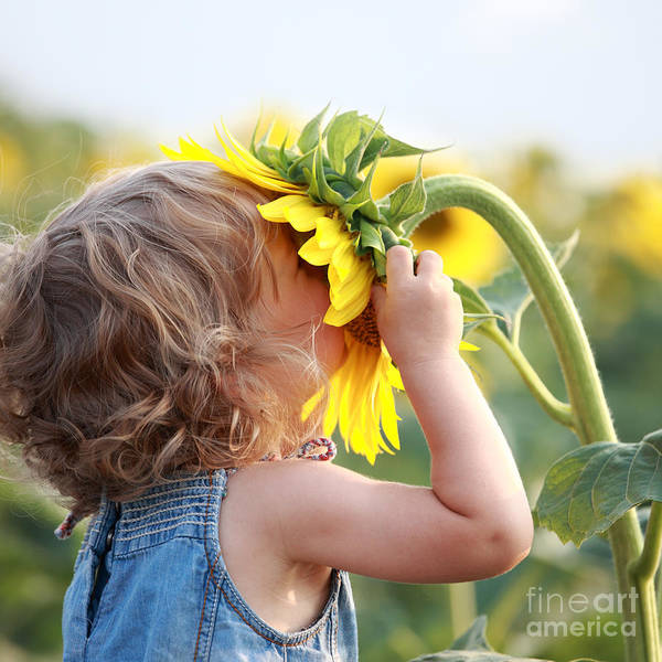 Wall Art - Photograph - Cute Child With Sunflower In Summer by Sunny Studio
