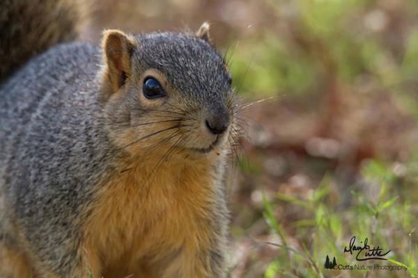 Photograph - Cute Curiosity by David Cutts