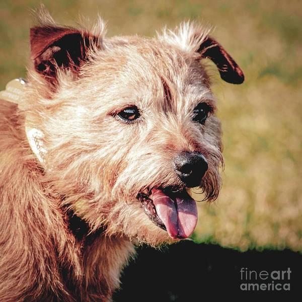 Photograph - Cute Dog by Nigel Dudson