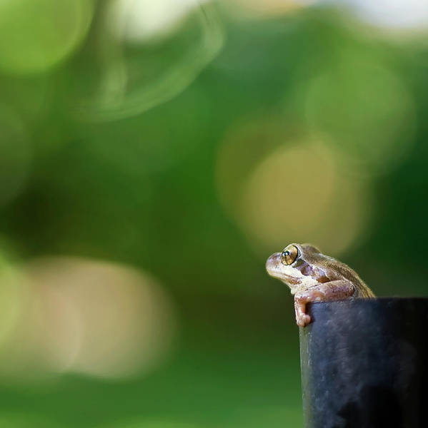 Ugliness Photograph - Cute Frog by Photos By Michelle Collyer