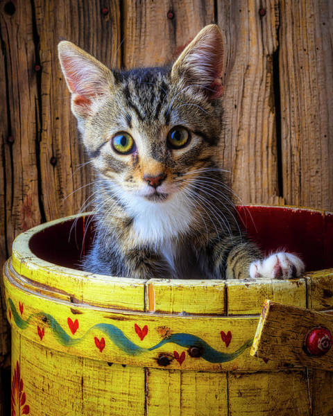 Wall Art - Photograph - Cute Kitten In Yellow Bucket by Garry Gay