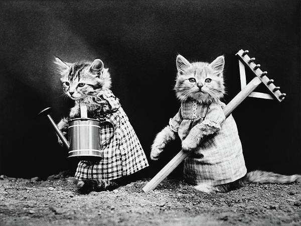 Wall Art - Photograph - Cute Kittens Gardening - Harry Whittier Frees by War Is Hell Store