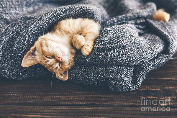 Wall Art - Photograph - Cute Little Ginger Kitten Is Sleeping by Alena Ozerova