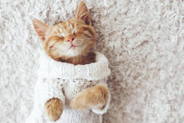 Wall Art - Photograph - Cute Little Ginger Kitten Wearing Warm by Alena Ozerova