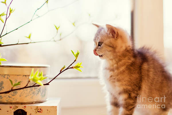 Fluffy Wall Art - Photograph - Cute Little Kitty Playing With Green by Aprilante