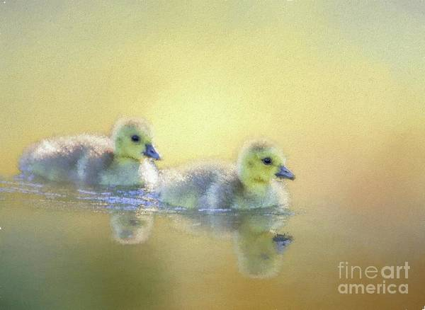 Goslings Mixed Media - Cute Little Swimmers by Eva Lechner