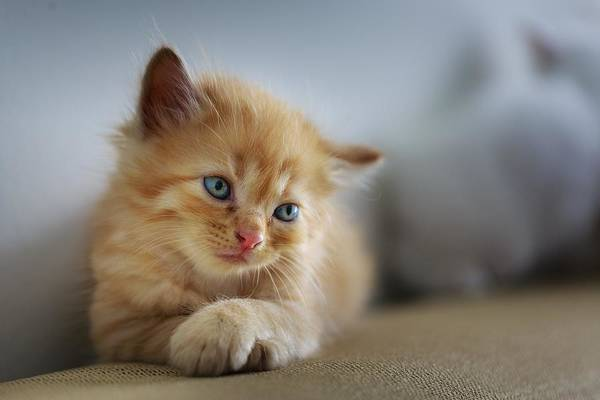Photograph - Cute Orange Kitty by Top Wallpapers