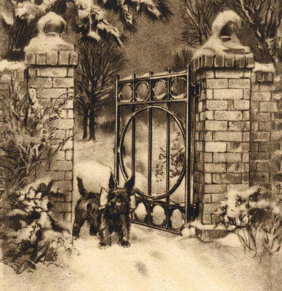 Quaint Drawing - Cute Scottie Dog Waiting For Owner by Marilyn Hunt