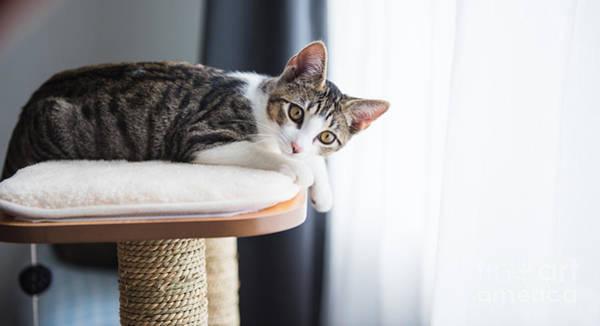 Wall Art - Photograph - Cute Tabby Kitten Relaxing On Top Of by Anna Hoychuk