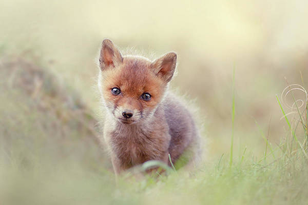 Wall Art - Photograph - Cuteness Overload Series - Per-animal-ification Of Cuteness by Roeselien Raimond
