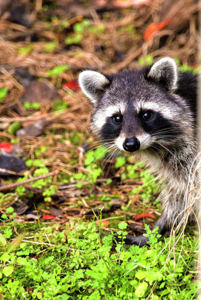 Photograph - Cutie Patootie by Kevin Banker