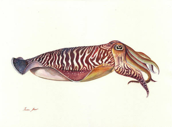 Sepia Painting - Cuttlefish Watercolor by Juan Bosco