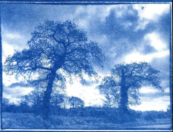 Painting - Cyanotype. Trees by Celestial Images