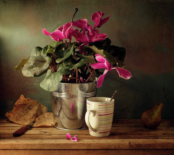 Fragility Photograph - Cyclomen Flower Pot And Cup With Strips by Copyright Anna Nemoy(xaomena)
