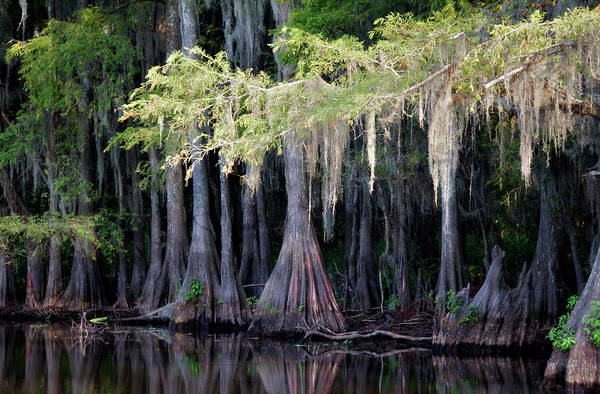 Wall Art - Photograph - Cypress Bank by Lana Trussell