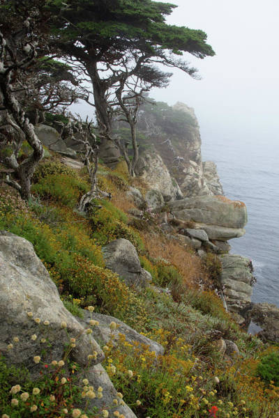 Photograph - Cypress Cliff by Marie Leslie