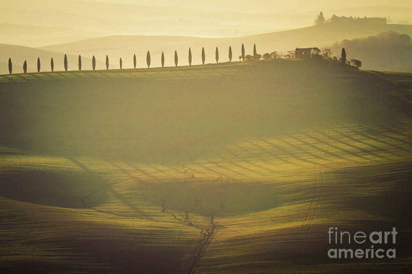 Wall Art - Photograph - Cypress Line In Tuscan Scenery by Heiko Koehrer-Wagner