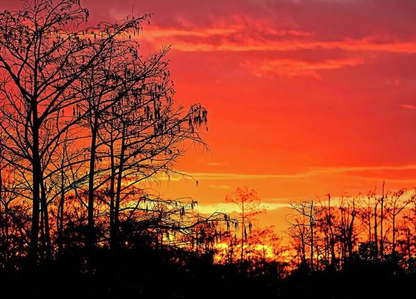 Photograph - Cypress Swamp Sunset 2 by Steve DaPonte