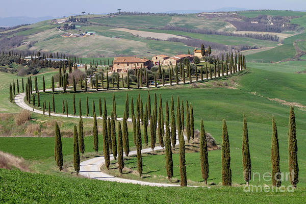 Wall Art - Photograph - Cypress Tree Alley In Tuscany-4 by Helga Koehrer-Wagner