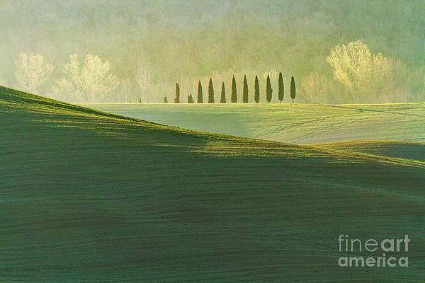 Wall Art - Photograph - Cypress Tree Lines by Heiko Koehrer-Wagner