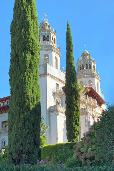 Photograph - Cypress Trees At Hearst Castle by Barbara Snyder