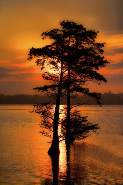 Wall Art - Photograph - Cypress Trees At Sunrise by Dan Carmichael
