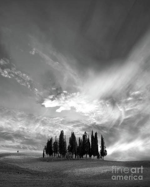 Wall Art - Photograph - Cypress Trees Black And White by Delphimages Photo Creations