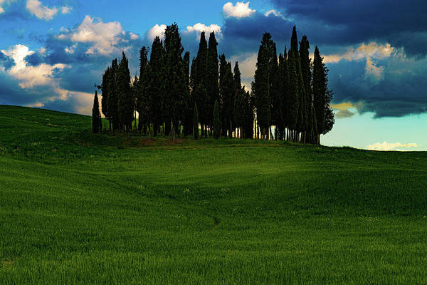 Photograph - Cypress Trees by Chris Lord