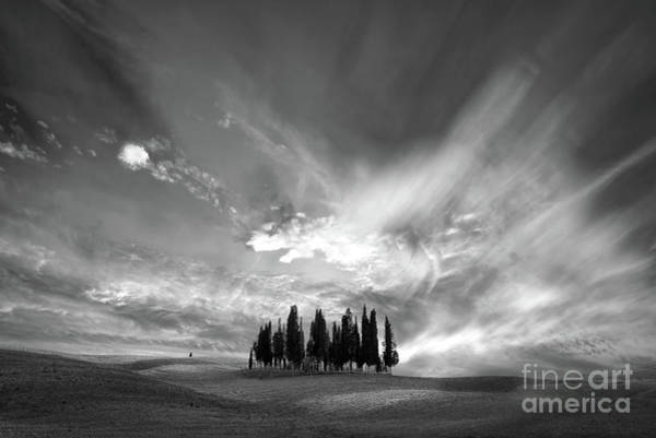 Wall Art - Photograph - Cypress Trees Cluster by Delphimages Photo Creations